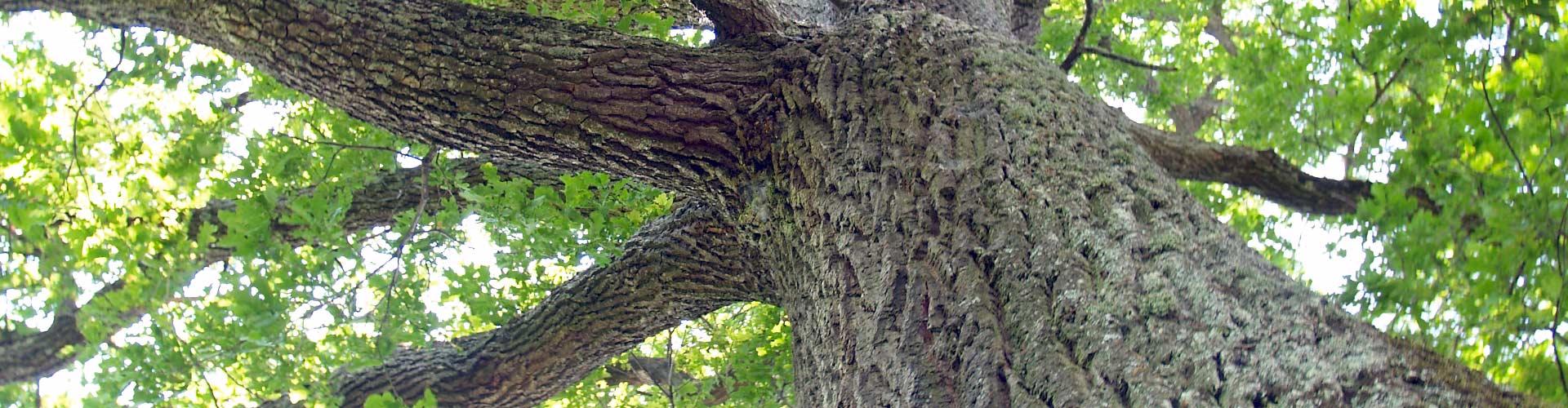 Bild Baum Schreiner Menge